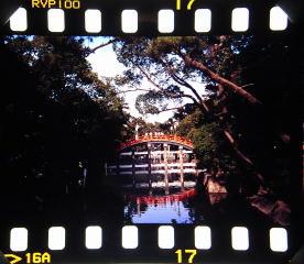 sumiyoshi_taisha1_5