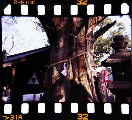 sumiyoshi_taisha1_8