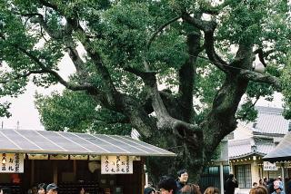 yakuyoke1_7